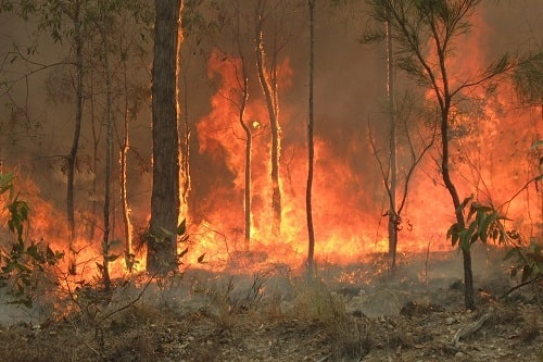 Bush Fire At Captain Creek Central Queensland Australia